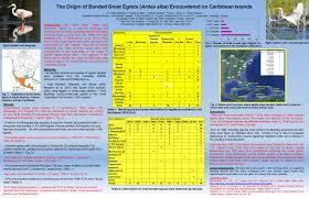 Assmann B Om El Abaco Scientist Bahamas Paper Archive