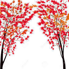 maple tree symbolism card with autumn maple tree red maples japanese red maple