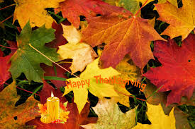 misc thanksgiving leaves nature fall high quality picture for hd