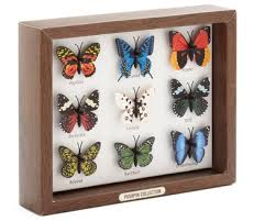 butterfly gifts unique butterfly gifts for the holidays mosi outside
