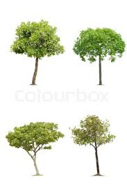 die cut tree lsolated on white stock photo colourbox