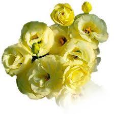 cut flowers cut flowers australia