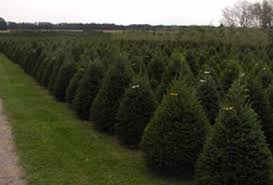 christmas tree farm exley u0027s christmas tree farmsexley u0027s