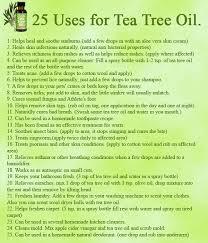 best 25 tea tree uses ideas on tea tree tea