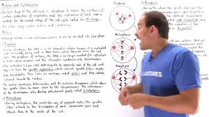 Mitosis Worksheet Phases Of The Cell Cycle Mitosis And Cytokinesis Youtube