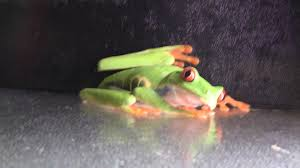 frogs u2013 wilmette pet center