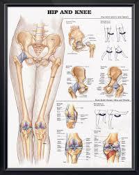3d Knee Anatomy The 25 Best Knee Joint Anatomy Ideas On Pinterest Knee