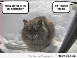 Depressed Cat Meme - depressed cat memes 27 hd