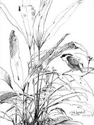 perched on a page the bird sketches of debby kaspari