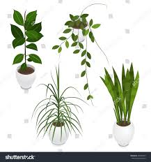 set potted indoor office house plants stock vector 495084559