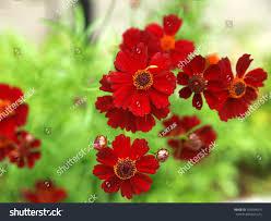 beutiful small flowers stock photo 105094073 shutterstock