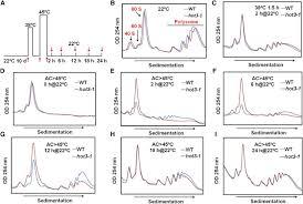 mutations in eif5b confer thermosensitive and pleiotropic