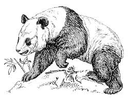 20 giant panda coloring pictures panda bear loves his ball