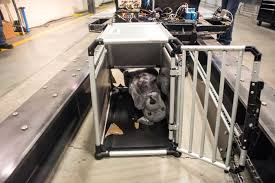 Sleepypod Mobile Pet Bed Subaru Of America And Center For Pet Safety Studies Showcase
