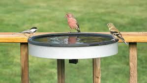 hummingbird birdbaths