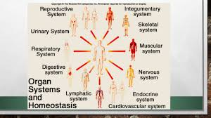 Nervous System Concept Map Anatomy And Physiology An Introduction Defintions Anatomy U2013 The