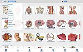 Picture Human Body Buy Human Anatomy Atlas 3d Anatomical Model Of The Human Body