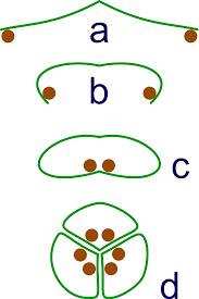 evolutionary history of plants wikipedia