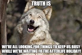 Moon Moon Memes - optimistic moon moon wolf vanadium wolf latest memes imgflip