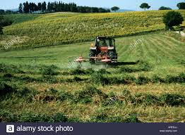 Tall Grass Landscaping by A Tractor Cutting Tall Grass In A Tuscan Agricultural Landscape