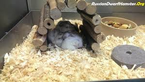 Hamster Cages Cheap Buying A Dwarf Hamster Cage How To Save Money U0026 Time