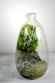 144 best garden terrariums u0026 cloches images on pinterest
