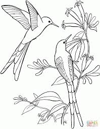 coloring pages rarest butterfly coloring pages hummingbird nest