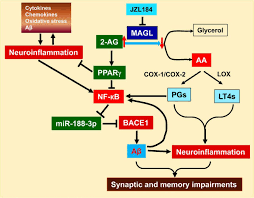 synaptic and cognitive improvements by inhibition of 2 ag