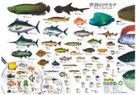 fish tank names aquarium fish names aquarium fish names fish