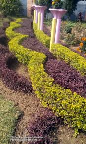 botanical sts garden st teresa s school bhagalpur lord of the sick saviour
