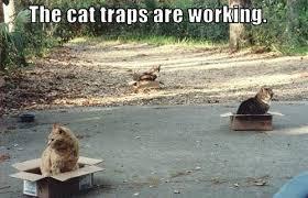 Working Cat Meme - the cat traps are working funny cat meme cute pet humor lol