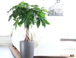 low light indoor trees low light indoor trees low light indoor plant 1 indoor low light
