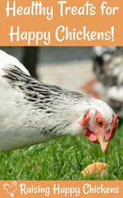 choosing the healthiest chicken treat for your hens