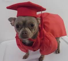 dog graduation cap and gown dog costume pet graduation cap and gown dog cap