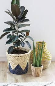 tips for repotting houseplants persia lou