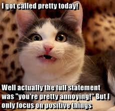 Positive Memes - cat memes purrfect love
