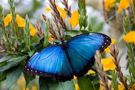 native georgia plants butterfly garden callaway gardens atlanta
