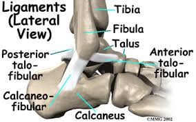 Lateral Collateral Ligament Ankle Sprained Ankle Houston Methodist