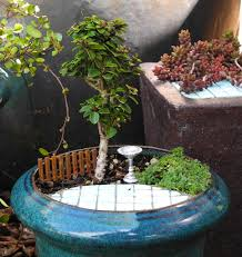 tiny gardens weather the mini garden guru from twogreenthumbs com