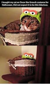 Halloween Cat Meme - bought my cat an oscar the grouch costume for halloween did not