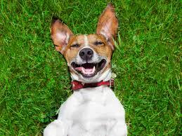 imagenes graciosas videos vídeos divertidos de perros todo mascotas