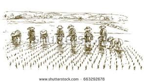 asian farmers working on field hand stock vector 619949450
