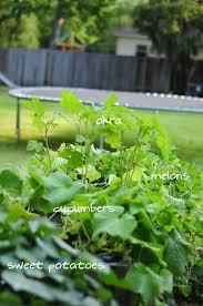 my summer garden phase two raised urban gardens