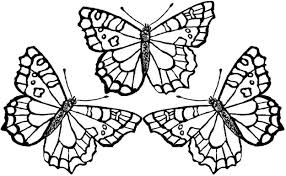 butterfly coloring page the sun flower pages