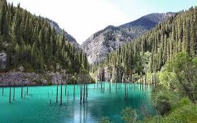 lake kaindy kazakhstan s submerged forest