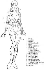 Human Figure Anatomy Human Body Archives Page 33 Of 60 Human Anatomy Chart