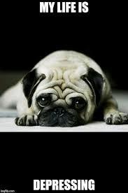 Depressed Pug Meme - depression imgflip
