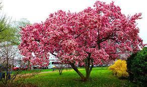 colourful trees for small gardens cori u0026matt garden