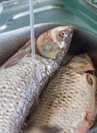 poisson a cuisiner poisson frais prêt à cuisiner poisson de lavage image stock image