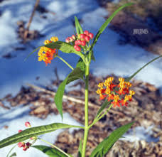 container garden ideas u2022 monarch butterfly garden